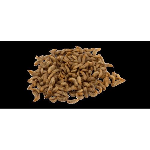 Чёрная львинка (Hermetia illucens)- Мука из насекомых