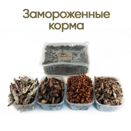 Сверчки (вакуумная упаковка, –18°С)- Замороженные  насекомые